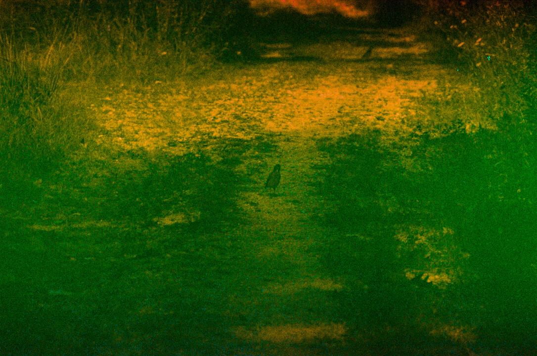 exobiology_green_01