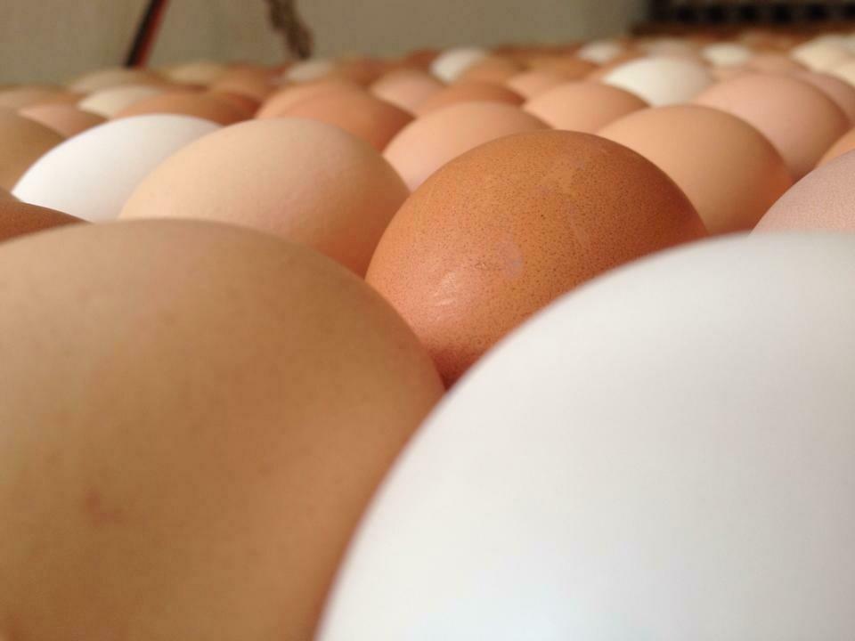 Eggs from Featherbrook Farm (1 Dozen)