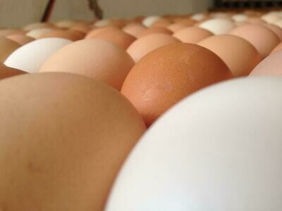 Eggs from Featherbrook Farm (1 Dozen)