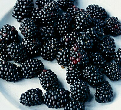 Berry, Blackberry (ea)