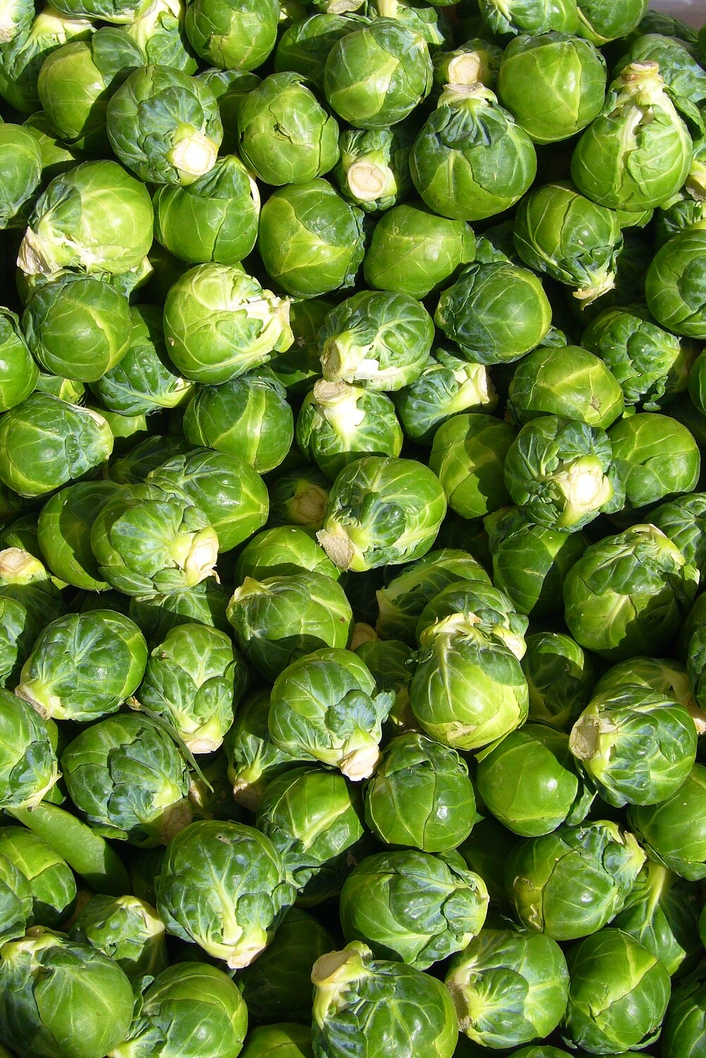 Brussels Sprouts  - 1/2 Pound