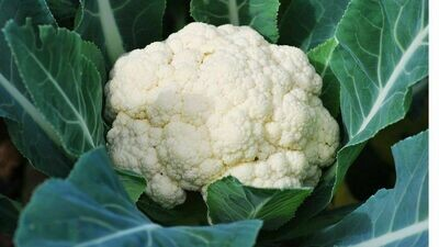 Cauliflower  - 1/2 Pound