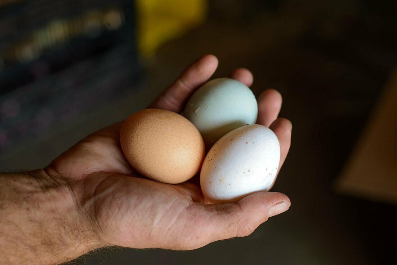 Eggs Silverbrook Farms (dozen)
