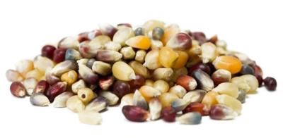 Orr Farm Tri-Colored Popcorn Kernels - 1/2 Pound Container