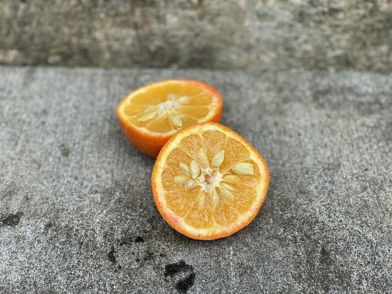 Oranges, Seville - 1/2 Pound