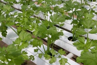 מערכת הידרופוניקה 48 צמחים