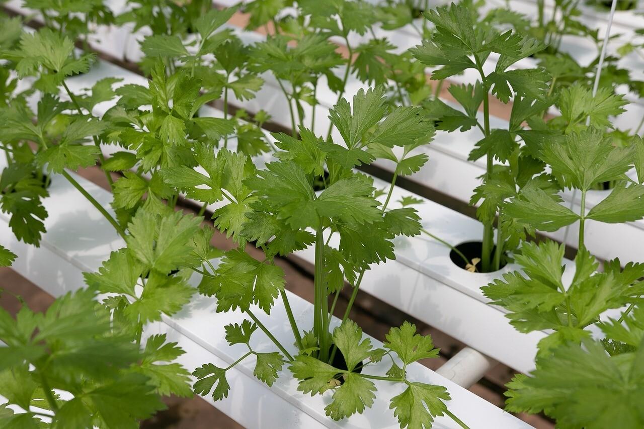 מערכת הידרופונית 24 צמחים