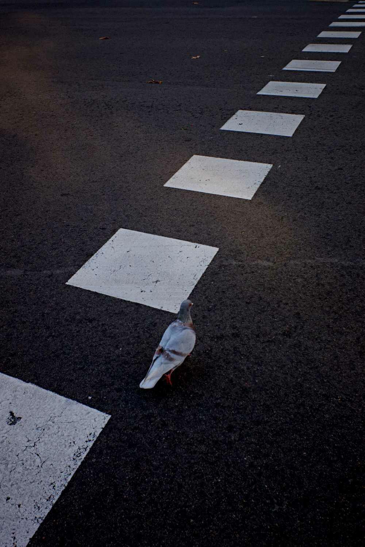 The dove walk. Universo Fran.