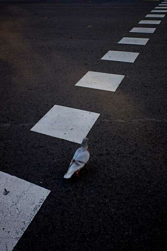 The dove walk. Universo Fran.