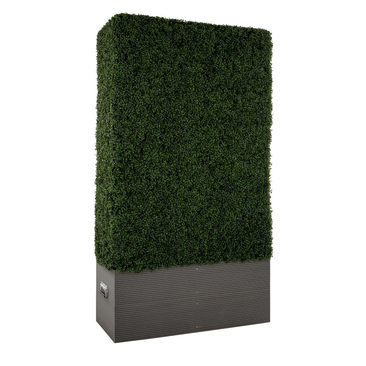 Large Boxwood Hedge Wall