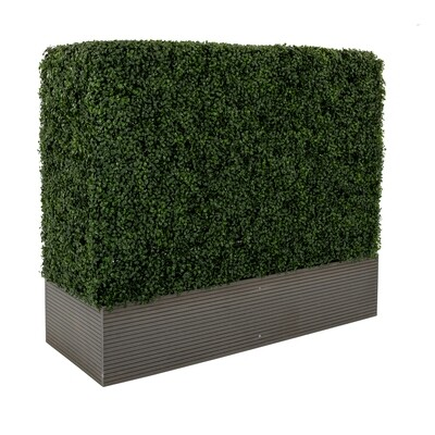 Small Boxwood Hedge Wall