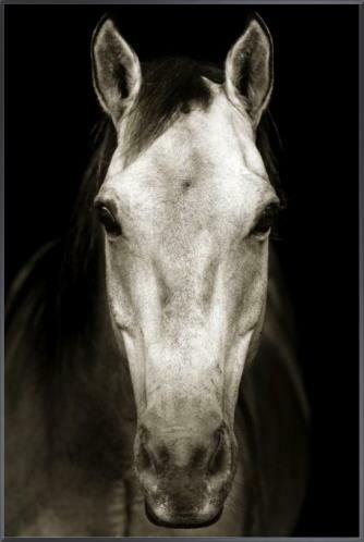 Tan Horse Painting 30