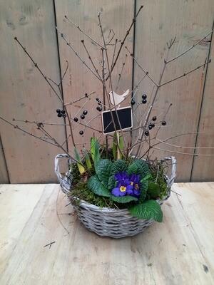 Frühlingsblüher im Korb mit Henkel