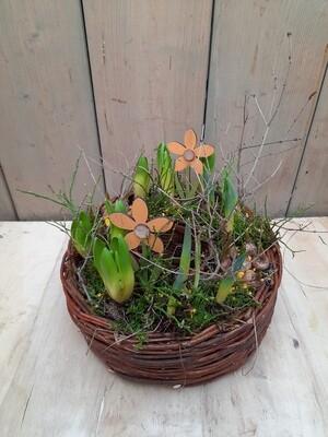 gesetzter Pflanzring mit verschiedenen Frühlingsblüher