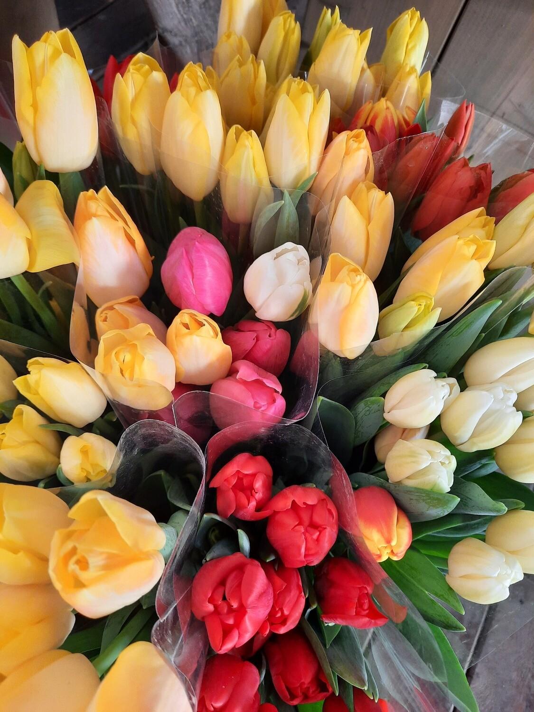 selbstgezogene Tulpen