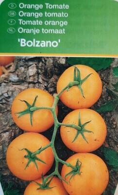 """Orange Tomate """"Bolzano"""""""