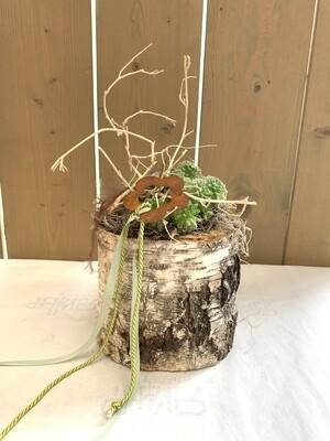 Indoor Sukkulentenpflanzung im Baumstamm