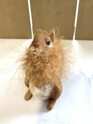 Eichhörnchen braun