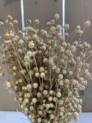 Flachsgras-Bund Trockenblumen