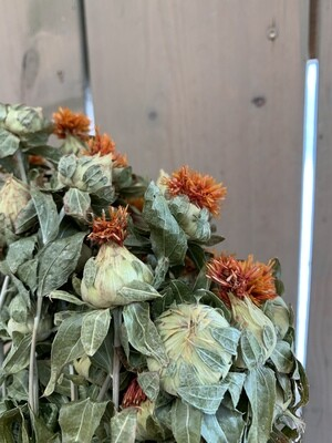 Färberdisteln-Bund Trockenblumen