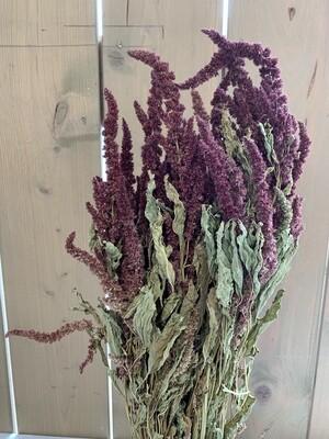 Amaranthus-Bund Trockenblumen