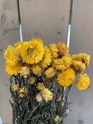 Strohblumen-Bund Trockenblumen
