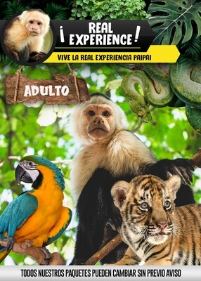 REAL EXPERIENCE ADULTO