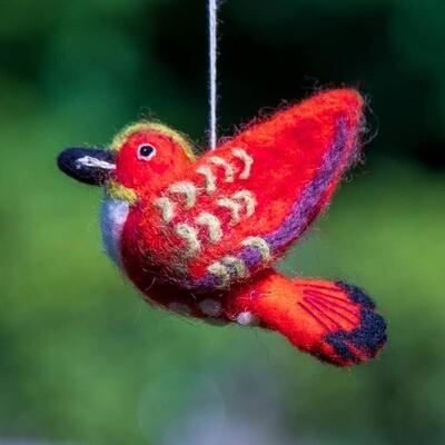 Rufous Hummingbird Woolie Bird