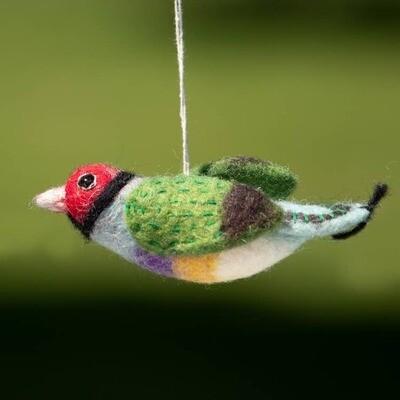Rainbow Finch Woolie Bird