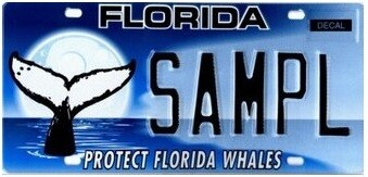 Protect Florida Whales Florida Specialty License Plate