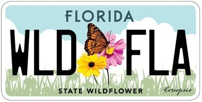 State Wildflower Florida Specialty License Plate