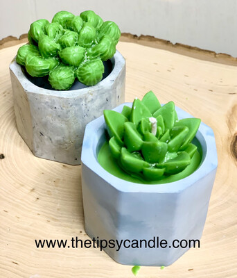 Set Of 2 Succulent Candles & Cement Holders