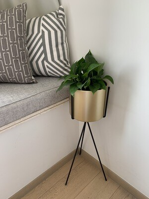Gold Flower Pot