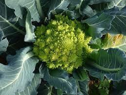 Romanesco broccoli (1 lb bag)