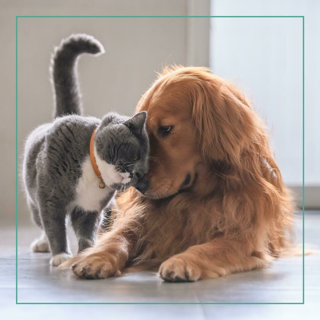 Cuidado de tus mascotas