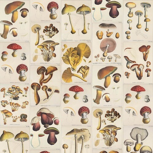 Wrapping paper MUSHROOMS
