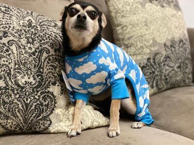 Pijamas para bebes caninos