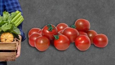 Tomates sauces (10kg)