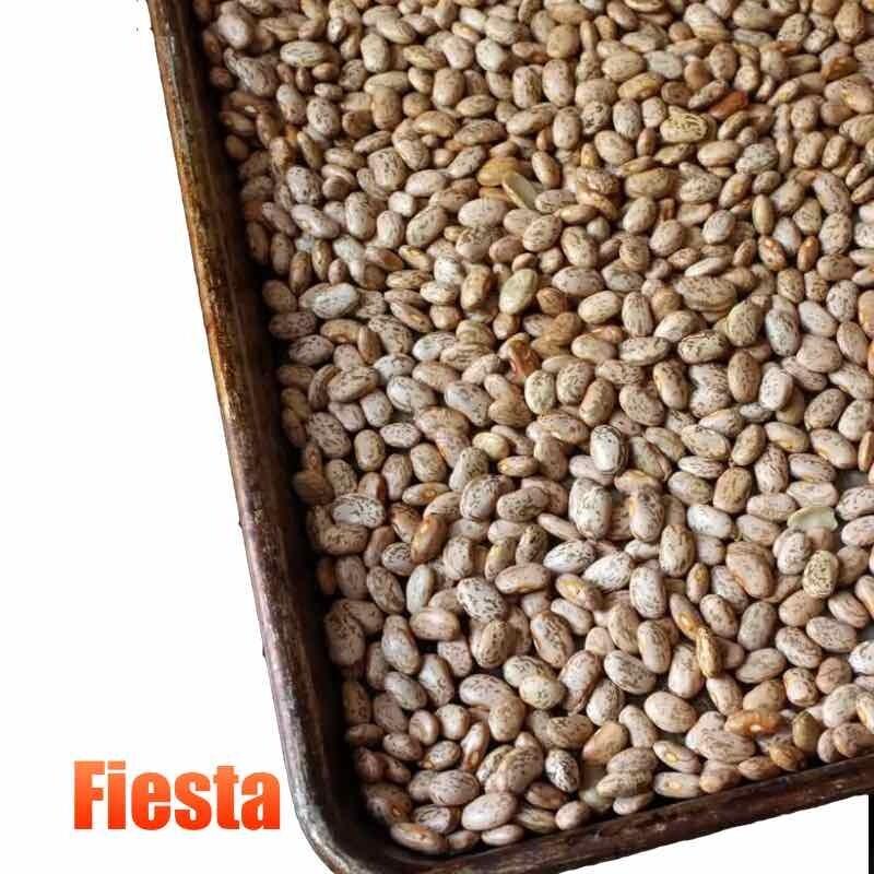 Fiesta Pinto Bens 10 Libras