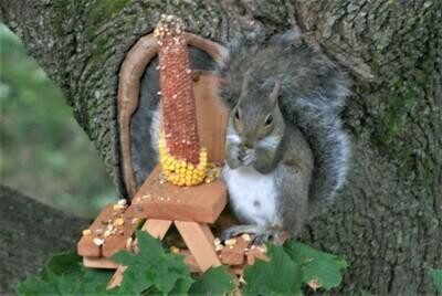Squirrel's Gotta Eat Picnic Table!