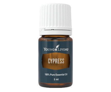 Cypress Essential Oil – 5ml