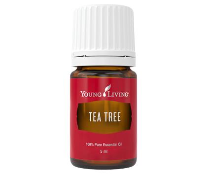 Tea Tree (Melaleuca Alternifolia) 5 ml