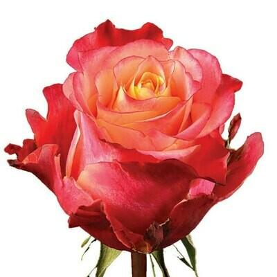 3D - Roses