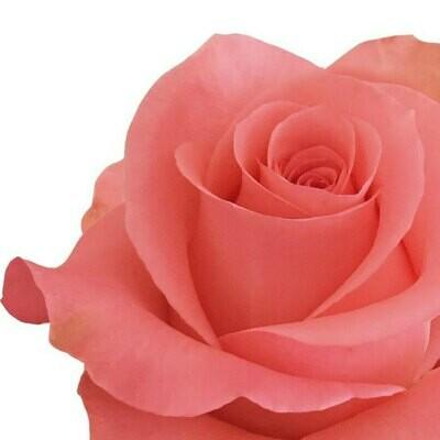 Bambina - Roses