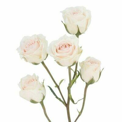 White Majolika - Spray Roses white