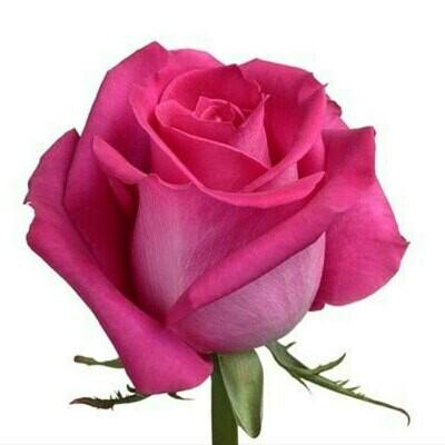 Topaz - Roses