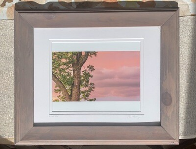 A Tree's View Framed