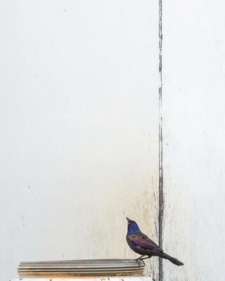 Bird Bath Canvas