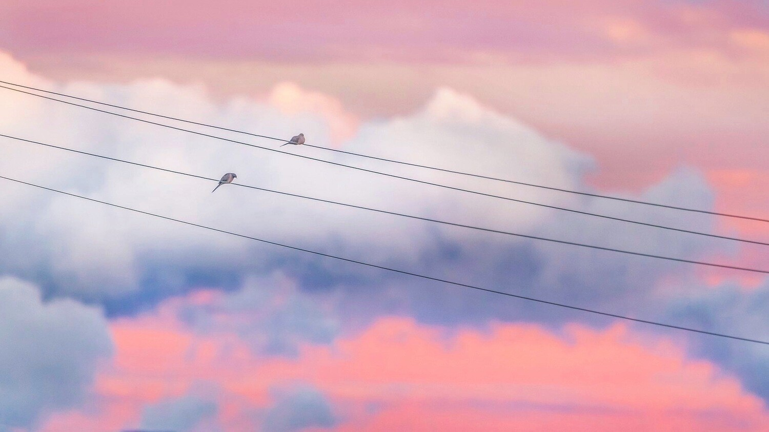 On the Wire Framed