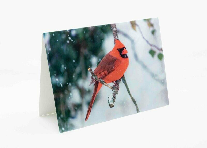 Holiday Cardinal Greeting Card